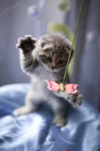 Younger cats and kittens prefer cat toys which are more active